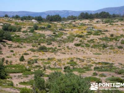 Pinar de Canencia y Mina de Plata del Indiano;paseo por madrid;lagunas de gredos